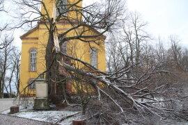 <p>Durch den heftigen Sturm in der Nacht zu Montag brachen Äste aus einer alten Linde vor der Lutherischen Kirche St. Petri in Augustusburg heraus. Das Kriegerdenkmal unterhalb der Linde wurde dabei beschädigt.</p>