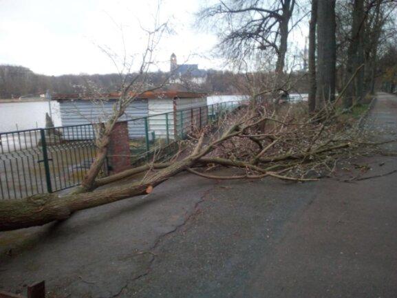 <p>Mehrere umgestürzte Bäume lagen am Montagmorgen am Chemnitzer Schlossteich.&nbsp;</p>