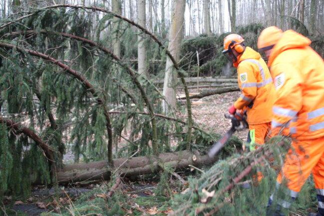 <p>Am Morgen schauten sich Mitarbeiter des Bauhofes Augustusburg und Mitarbeiter der Straßenmeisterei die Schäden an und begannen mit der Beseitigung der Bäume.</p>