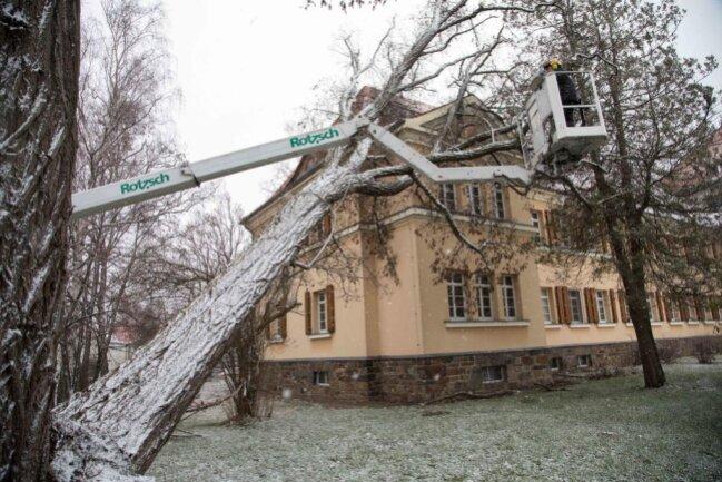 <p>Am Montagmorgen wurde der Baum beseitigt.</p>