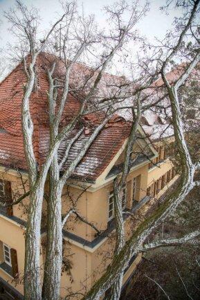 <p>In Freiberg ist ein Baum an der Ecke Leipziger Straße/Lampadiusstraße auf ein Uni-Gebäude gefallen und hat das Dach beschädigt.</p>