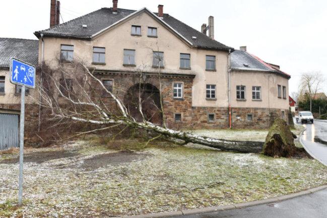 <p>Im Oberschönaer Ortsteil Wegefarth&nbsp;ist eine Birke in der Nähe des Rittergutes umgestürzt.&nbsp;</p>