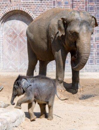 <p>Das warme Wetter wirkt sich positiv auf die Entwicklung des 128 Kilogramm leichten Indischen Elefanten aus.</p>