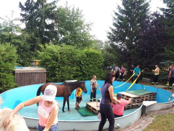 <p>So konnte das Pferd bequem aus dem Pool steigen.&nbsp;</p>