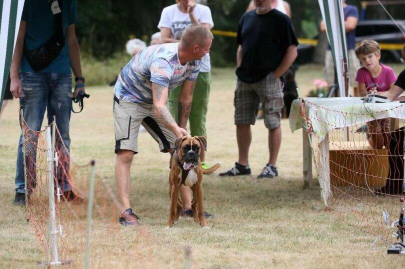 <p>Die Hunde hatten eine Strecke von 30 Metern zu bewältigen.</p>