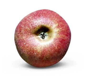 <p>Boskoop: fruchtig-säuerlich, mittelfest, festes, saftiges Fruchtfleisch, später mürbe, gut haltbar, hoher Zucker- und Säuregehalt; Verwendung: frisch, Kuchen, Bratapfel, Kompott; Ursprung: Niederlande</p>