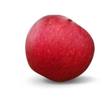 <p>Evelina: süß-säuerlich, aromatisch, fest, knackig, meist rot, aber auch in satten Gelbtönen, widerstandsfähig, lange lagerfähig; Verwendung: frisch; Ursprung: Deutschland, Dresden-Pillnitz;&nbsp;</p>