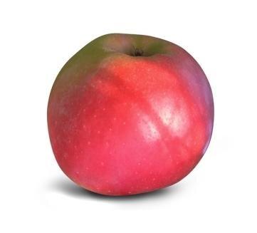 <p>Kanzi: süß-säuerlich, aromatisch, festes, knackiges Fruchtfleisch, hoher Säureanteil, lange lagerfähig, viel Vitamin C; Verwendung: frisch, für Kuchen und als Bratapfel; Ursprung: Belgien;</p>