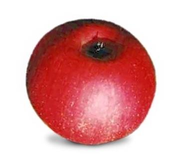 <p>Shampion: dezente Süße, milde Säure, zart aromatisch, festes Fruchtfleisch, saftig, mittlere Lagerfähigkeit; Verwendung: frisch, für Kompott und Kuchen; Ursprung: Tschechien</p>