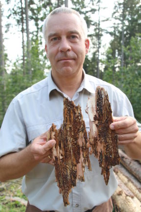 <p>Thomas Vogel, Revierleiter Forstrevier Falkenau, zeigt beschädigtes Holz.</p>
