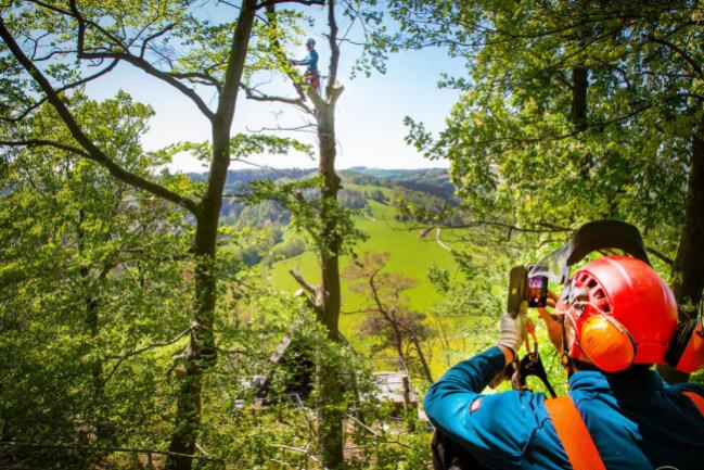 <p>Während Forstarbeiter des Reviers Kleinolbersdorf am Steilhang zwischen Kunnersdorf und Kunnerstein die Bäume fällen....</p>