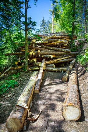 <p>Im vergangenen Jahr starb dort der Fichtenwald auf einer Fläche von 0,8 ha Fichtenwald ab.</p>