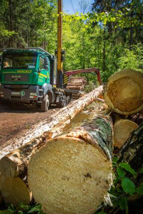 <p>Im Revier Kleinolbersdorf – am Steilhang zwischen Kunnersdorf und Kunnerstein – muss eine Fläche von zirka 2,5 Hektar abgeholzt werden.</p>