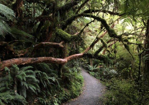 <p>Regenwald an der Westküste</p>