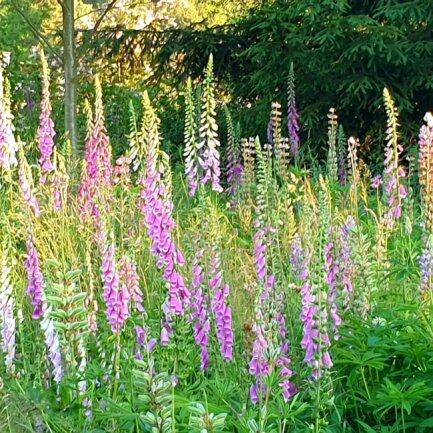 <p>Ein Foto aus dem Kerstin Gehrkes Garten.</p>