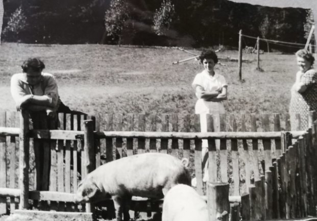 """<p><span class=""""img-info"""">Auf dem Gelände wurden auch Schweine und Schafe gehalten.</span></p>"""