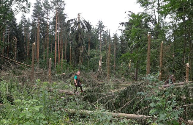 <p>Revierleiter Frank Günther von der Rotenhanschen Forstverwaltung Revier Oberwald verschafft sich einen ersten Überblick über die Schäden.</p>
