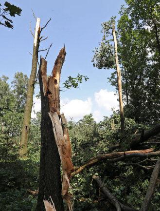 <p>Eine Schneise von etwa sieben&nbsp;Kilometer Länge und 100 Meter Breite wurde durch den gesamten Wald getrieben.</p>