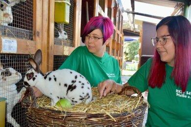 Nicole Philipp (Foto links) und Jessica Bohni (rechts) am Korb mit einem Rassekaninchen, das als Dalmatiner-Rex Havanna-Weiß bezeichnet wird. Die beiden Frauen sind im Pleißaer Rassekaninchen-Zuchtverein aktiv und bereiten dessen nächste Schau mit vor.