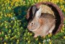 Die im Frühjahr erwachende Natur bietet neue Fotomotive.