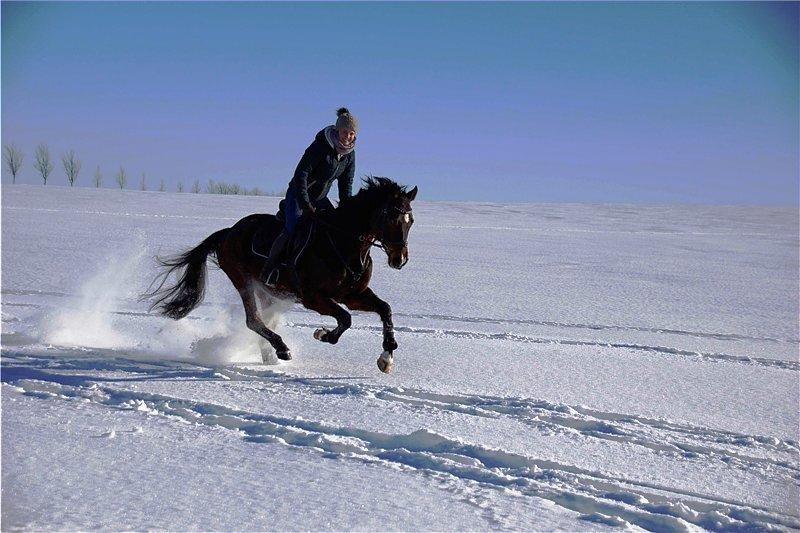 """Das Bild ,,Grenzenlose Freiheiten"""" von Stephanie Fasold aus Stollberg zeigt sie mit ihrem Pferd Roy bei einem Winterausritt. Es vermittelt Energie und Lebensfreude."""