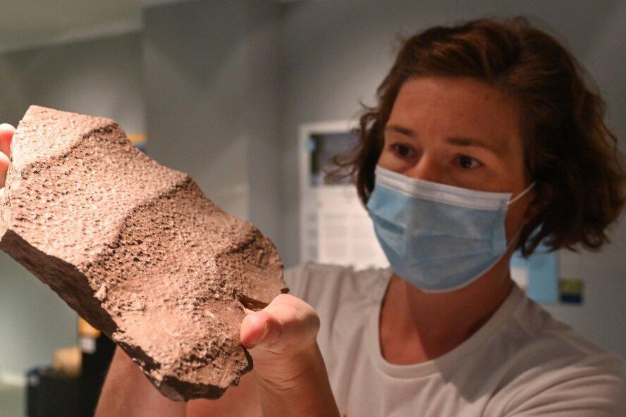 Kustodin Thorid Zierold zeigt im Naturkundemuseum einen Stein mit darin eingeschlossenen Regentropfen.