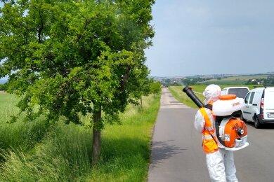 In Schutzkleidung werden durch Mitarbeiter der Schädlingsbekämpfungs GmbH Hainichen die Bäume im Landkreis Mittelsachsen mit einem Biozid behandelt. Das tötet die Raupen des Goldafters und des Eichenprozessionsspinners ab und verhindert Kahlfraß.