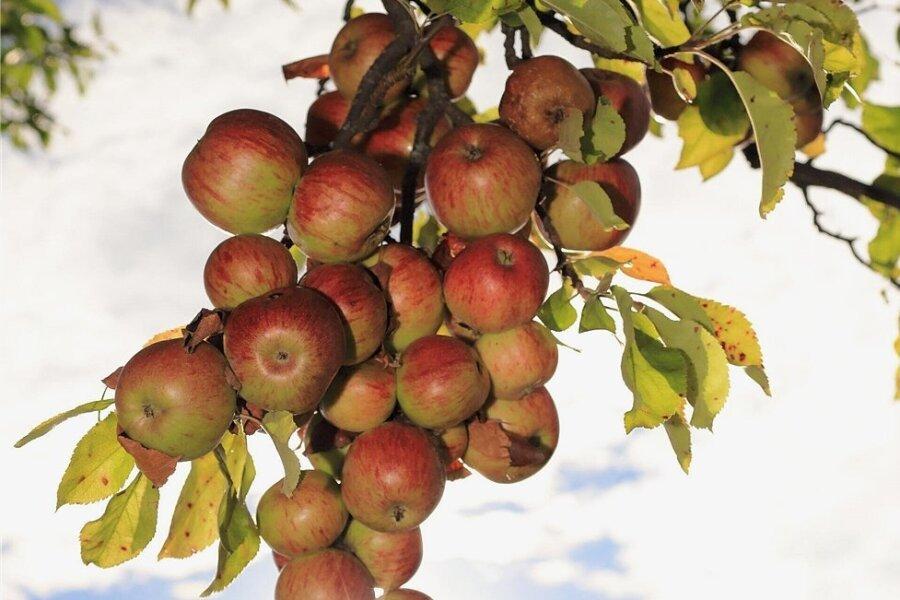 Knackig, rot, süß, leuchtend: Äpfel.