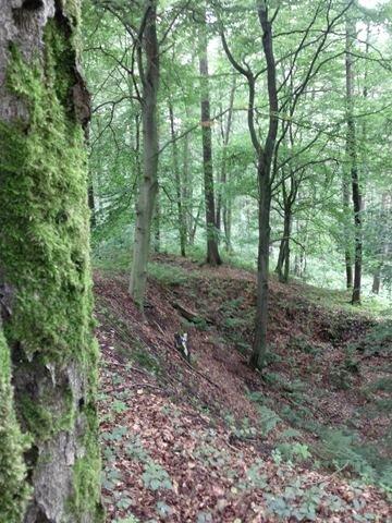 Ein Schatz im Poppenwald? Bad Schlema will die Suche danach koordinieren.