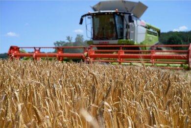 Getreideernte auf einem Gerstenfeld bei Grimma (Landkreis Leipzig) im Juli. Nach drei trockenen Jahren hat nun ein regenreicher Sommer für Einbußen bei der Getreideernte in Sachsen gesorgt.