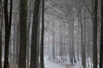 Wieder Zutritt zu Wäldern im oberen Vogtland