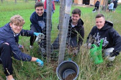 Theodor Sachs, Eyrik Gerstenberger, Felix Ranca und Raphael Müller (von links) bringen den Schutz gegen den Großen Rüsselkäfer an einem der Obstbäume auf.