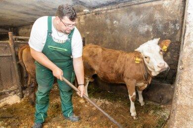 Zwei Milchkühe und ihre Nachzucht gehören neben Grün- und Ackerfläche zu der kleinen Landwirtschaft, die im Nebenerwerb betrieben wird.