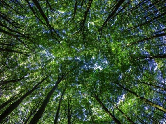 Geldanlagen in Umweltprojekte bringen Rendite - das zumindest versprechen manche Anbieter.