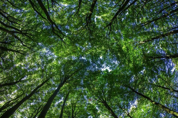 Wäldern drohen nach Sturm und Hitze irreparable Schäden