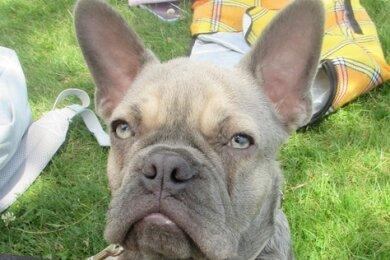 Einejunge französische Bulldogge ist am Montag der Grund für einen handgreiflichen Konfliktam Untreusee bei der Stadt Hof gewesen.