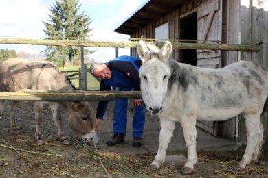 Die Esel Pedro (grau) und Emmy lassen sich gerne von Tierpfleger Holger Rosemann verwöhnen.