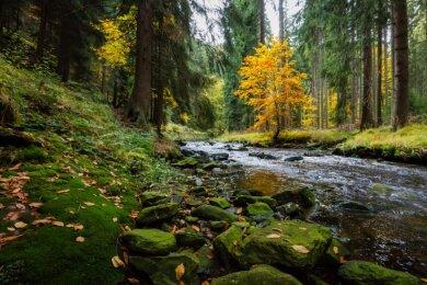Im Schwarzwassertal lassen sich beispielsweise Wanderlust und das Fotografieren prima verbinden.