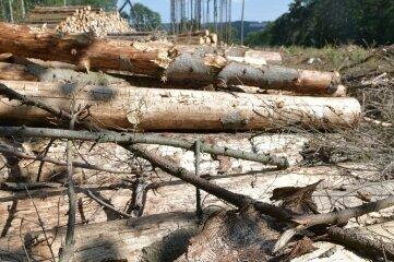 Bäume wie vom Borkenkäfer befallene Fichten an der B 173 zwischen Oberschöna und Abzweig Kirchbach waren 2020 in vielen Teilen Mittelsachsens an der Tagesordnung.