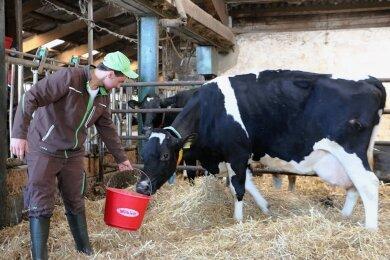 Mitarbeiter Marcel Harnisch mit Kuh Liesel, die in ihrem Leben bereits 100.000 Liter Milch gegeben hat. Derzeit ist sie tragend, wird im Dezember zum zehnten Male kalben.