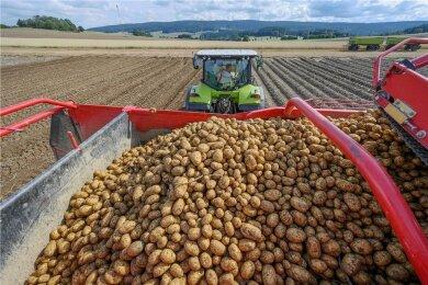 Kartoffelernte bei der Zwönitzer Agrargenossenschaft. Bis Ende September wird sie sich noch hinziehen.