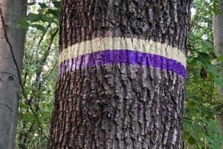 Ein lila Wanderpfad, den es noch nicht gibt: Entlang des Purple Path werden Künstler temporäre oder auch bleibende Kunstwerke zeigen.