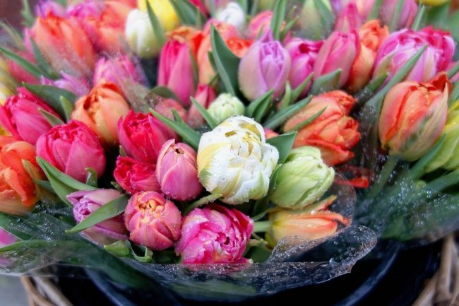Sorgten einst für Turbulenzen auf dem Finanzmarkt, heute sorgen sie vor allem für Freude auf dem Tisch: Tulpen.