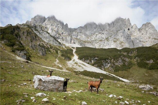 Begegnung im Kaisergebirge - im Hintergrund grüßen die Gipfel des Wilden Kaisers.