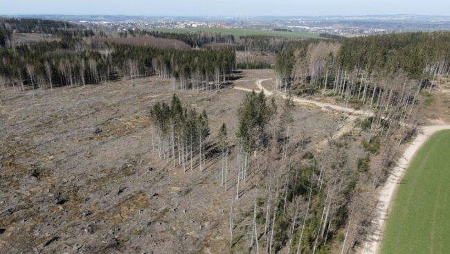 Zwei Jahre nach dem Tornado ist die zerstörte Waldfläche bei Brünlos immer noch deutlich zu sehen. Dort braucht es Neuanpflanzungen von Bäumen, die Pioniercharakter haben.