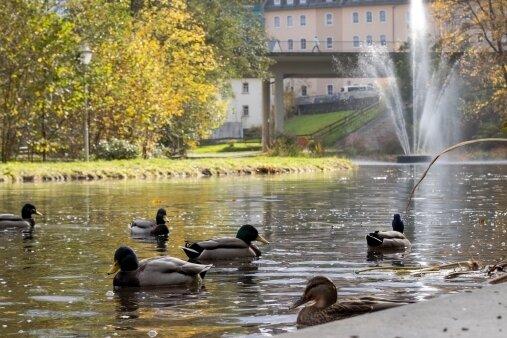 Für den Waldschlößchenpark soll mehr geworben werden. Eine bessere Beschilderung ist dabei ein Aspekt. Auch mit Veranstaltungen soll die Anlage mehr Aufmerksamkeit bekommen.