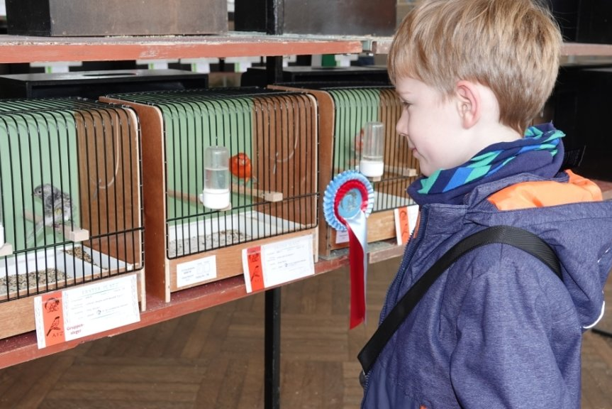 Karl Aurich gehört zu den jüngsten Besuchern der Ausstellung in der Muldentalhalle. Er bestaunte vor allem die Farbenvielfalt der gezeigten Vögel.