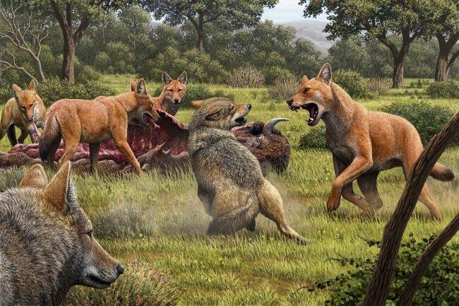 Die im roten Fell gezeigten Schattenwölfe stritten wohl vor mehr als 13.000 Jahren mit den noch heute lebenden grauen Wölfen, bei der Partnerwahl aber kamen diese anscheinend nicht in Frage.