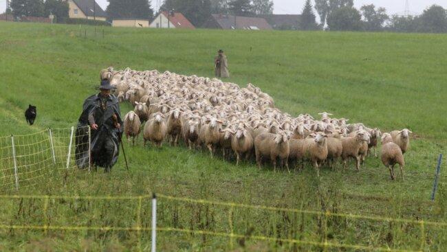 Auf der großen Wiese gegenüber der Thomas-Müntzer-Siedlung in Waldenburg fand der Wettbewerb der Hütehunde statt.