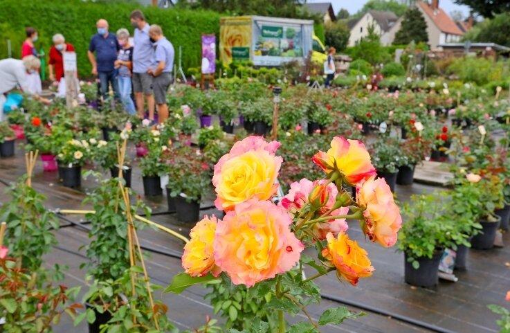Fachsimpeln unter Rosenfreunden und mit Baumschulpersonal wie hier 2020 gehört beim Fest dazu.